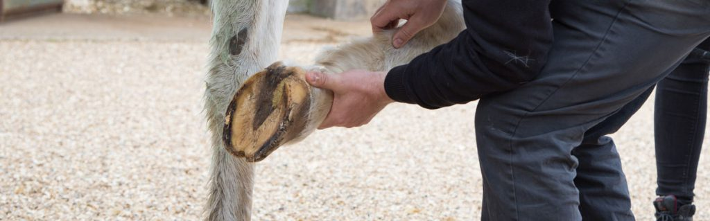Tendons and ligament injuries | Scott Dunn's Equine Clinic