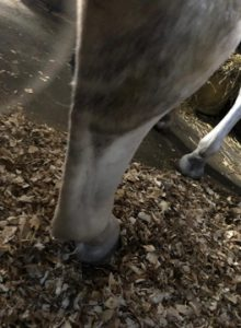 Unclear rear view of horse's hooves