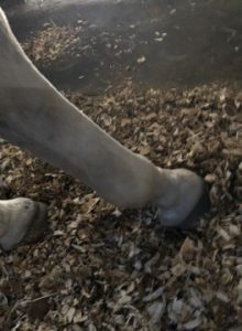 Unclear side view of horse's hooves